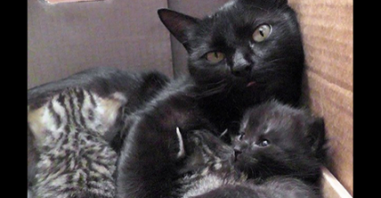 She's Having A Conversation With Her Kittens, But Just Listen…Sweetest Sound Ever, SOO Cute!!