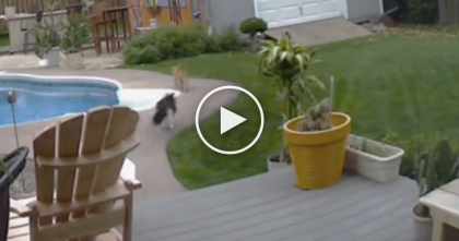Black Cat Notices Orange Cat Trespassing On His Property, But What He Does Next… OMG.
