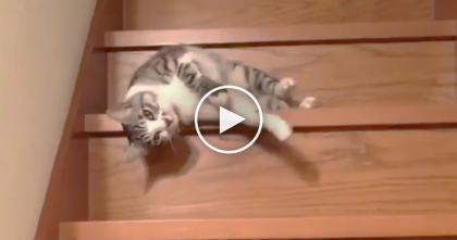 Cat Discovers A New Way To Get Down The Stairs, And You've Gotta See It… Omg, HILARIOUS.