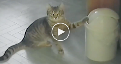 He Discovered A New Toy, But When You See What He's Doing With It… This Is Hilarious!