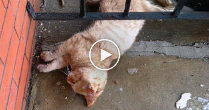 He Found A Frozen Dead Cat On His Front Porch, But When He Felt THIS On Her Paw? Omg…