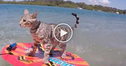 He Goes To The Lake, But What This Cat Does?? Keep Watching Till 0:17, You Won't Believe THIS…