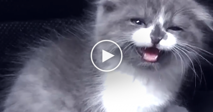 He Got A New Kitten, But Didn't Know What Would Happen… Just Watch The Results, It's TOO Cute!!