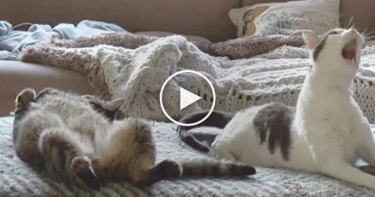 He Heard Some Strange Noises, But When He Found The Reason Why…Just Turn Up Your Volume!