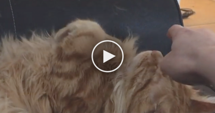 He Taps His Cat On The Nose When He's Sleeping, But Watch The Cats Response… LOL!!