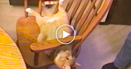 "He Tells His Cat To ""Flip"" But Watch What The Cat Does Shortly After… WOW, How Does He Do That?!"