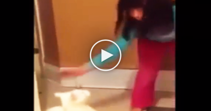 Horrible Kid Hits Cat On The Face, But Keep Watching… She Gets EXACTLY What She Deserved.