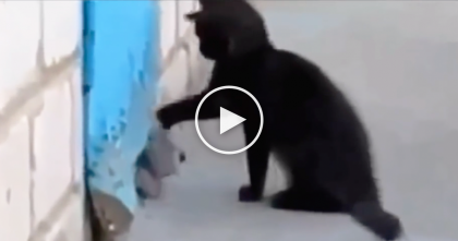 Kitten Notices Doggie Friend Trapped Inside, But What He Does Next?? Just Watch… SOO Sweet!!