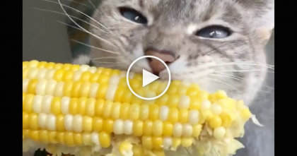 Kitty Notices Some Corn, But It's What He Does You'll Want To See…Prepare Yourself For It, LOL