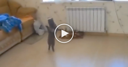 Kitty Smells Something, But Then Gets Scared… Now Watch How He Reacts At 0:07, Omg!!