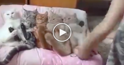 She Starts Lining Up Her Cats, But If You Watch Till The End… OMG, How Is This Even Possible??