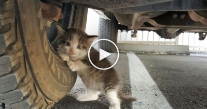 Man Finds Shaking Kitten Underneath Truck, But When You Look At That Face…Oh WOW!