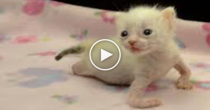 Poor Kittens Dumped At Shelter Within Hours Of Their Birth, But Watch Till The End…