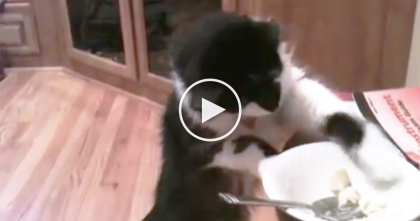 She's Eating Food, But When She Looks Away For Just A Moment… Watch What Kitty Does, LOL!!