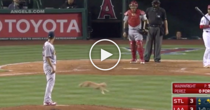 Stray Cat Stops The Whole Baseball Game, But What Happens At The End? I'm So Relieved!