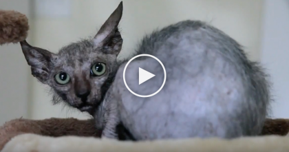 They Thought This Cat Was Sick, But When They Found Out The Truth…Incredibly Rare, WOW