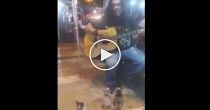 This Street Performer Doesn't Have A Huge Audience, But Look By His Feet… Omg, SOO Cute!!
