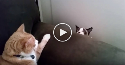 Kitty Was Relaxing On The Couch, But Then All Of A Sudden… Now I Can't Stop Laughing, OMG.