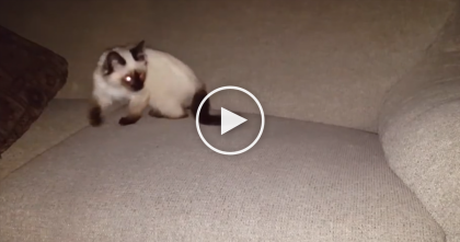 Kitten Gets Lost In The Couch, But A Few Moments Later… Just Watch Till 0:27, LOL!!