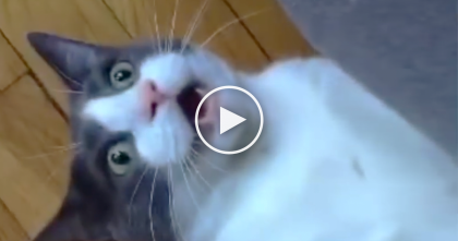 Cat Rejected By 5 Previous Owners, But Then… The End Just Warmed My Heart, Awwww!!