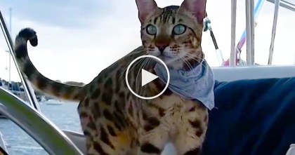 Cat Spends All His Life On Water, But When You Find Out Why? This Is SOO Cute, WATCH