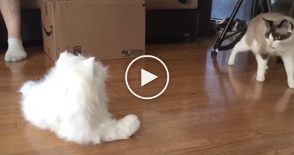 "Cats Discover White ""Robo Cat"" But You've Gotta See Their Reaction… Especially What Happens At 0:58…"