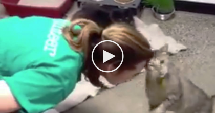 Every Time She Reaches Down To The Cat, THIS Is What He Does…OMG, It's TOO Darn Adorable!!