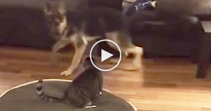 Fearless Cat Stands Up To Barking Dog, But When You See The Reason Why… SOO Funny, Omg!!