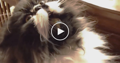 Fluffy Kitty Wanted To Try Some Ice Cream, But They Didn't Expect THIS… Watch His Reaction, Omg!!