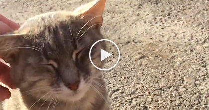 He Came Up With This Plan To Catch A Cat…When You See How He Does It?? LOL, It's Genius!