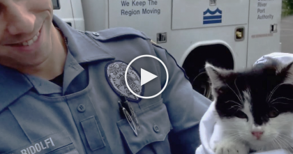 He Saw A Kitten Being Thrown Out The Window, But Moments Later… You've Gotta See THIS.