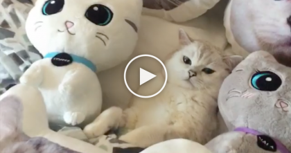 It Looks Like A Bunch Of Cat Pillows, But Keep Watching… OMG, It's Just TOO Cute!!