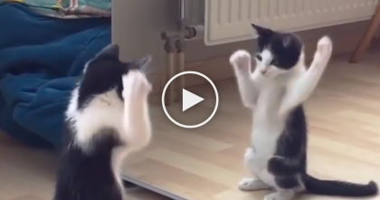 Kitten Brutally Attacks Someone In The Mirror, But It Ends Up Being Utterly Adorable… Awwww!