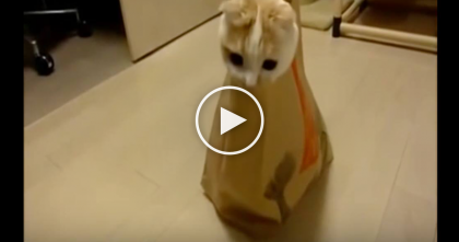 At First, All You See Is A Paper Bag And A Tail, But Keep Watching For It… LOL, Too Cute!!