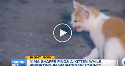 Kitten Crashes The News, Then Surprises Viewers On Live TV For One Very Special Reason… Just WATCH