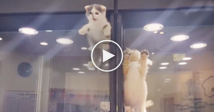 Kitten Notices Lonely Puppy In Pet Store Display… Now Watch What The Kitten Does Next, OMG