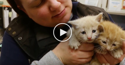 Kittens And Their Mom Are Thrown Out The Car Window, But Watch When She Rushes Over…