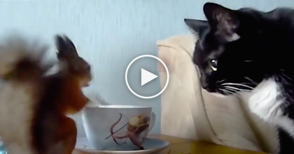 Kitty Wakes Up In The Morning, But You Won't Believe Who He's With… WOW, Just Watch!