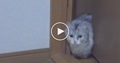 Sneaky Kitty Attempts To Creep Up On Human In Slow Motion… Just Watch That Little Paw!