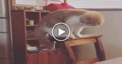 Kitty Tries To Grab Something Under The Bench, But When You See It… This Is Hilarious, LOL!