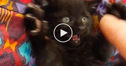 Meowy Chatty Kitten Loves To Play, But You've Gotta Hear The Sound…I Don't Know What To Say?!