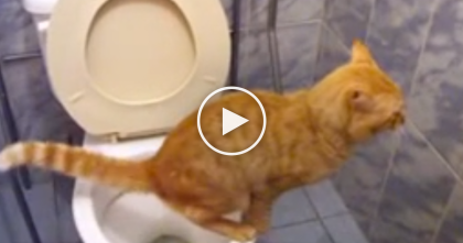 She Goes In The bathroom With Her Ginger Cat, But Keep Watching Till The End… WOW!!