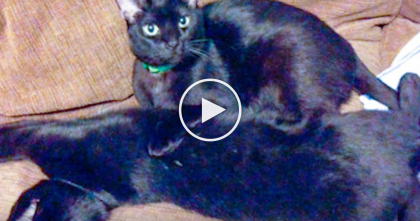 They Adopted A Cat And It Didn't Go As Planned, But Then…What Happens Here Is SOO Sweet!