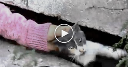 They Heard A Terrified Meowing Sound, But When They Discovered What It Was… Wow!