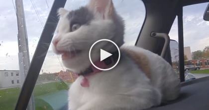 Kitten Notices Birds Out The Window, But Just Listen To The Response… This Is SOO Cute!!