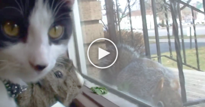 They're Staring Out The Window, But Then… Watch Their Reaction When They See What's Outside