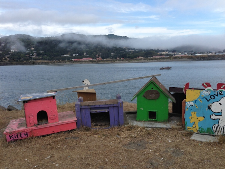 The-Meow-Post-gold-beach-cat-condos-jetty-cats-houses1