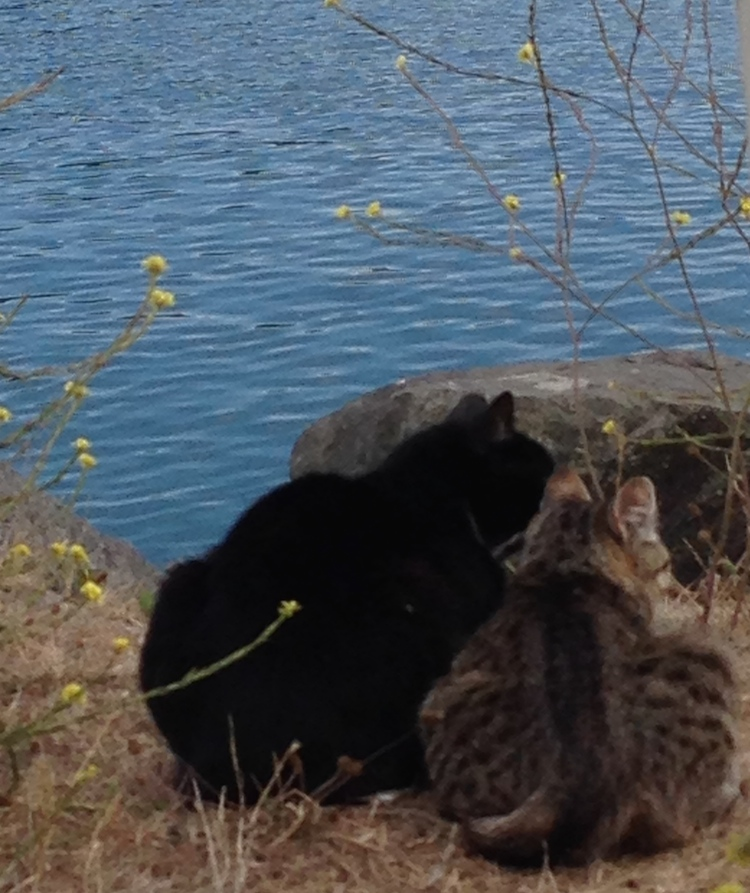 The-Meow-Post-jetty-cats-looking-out-gold-beach1