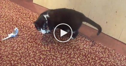 Bird Is Madly In Love With A Cat… Now WATCH What This Birdie Does After Discovering Him…