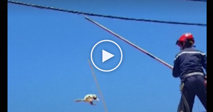 Cat Climbs Onto Power Lines, Now Keep Watching Till 0:23… That's When My Heart Stopped.